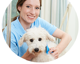 Dog Groomer courses