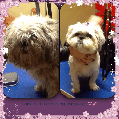 Dog Grooming Courses Somerset
