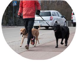 Dog Walking courses