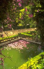 A tranquil pond on a summer's day - pure heaven!