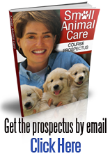 Animal care course brochure